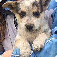 Adopt A Pet :: Ranger (6 lb) Video - Sussex, NJ