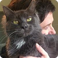 Adopt A Pet :: Joplin - Lombard, IL