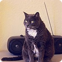 Adopt A Pet :: Kensi - Tucson, AZ