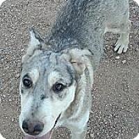 Adopt A Pet :: Cherish - Gilbert, AZ