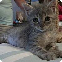 Adopt A Pet :: Betsy - Reston, VA