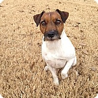 Adopt A Pet :: Khole in Bixsby - Oklahoma City, OK