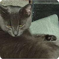 Adopt A Pet :: Mona - Westfield, MA