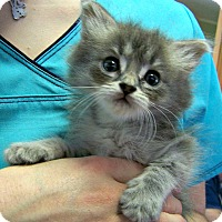 Adopt A Pet :: Watson - Toledo, OH