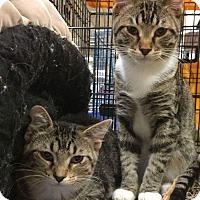 Adopt A Pet :: Sahara - West Lafayette, IN