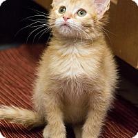 Adopt A Pet :: Bronn - Chicago, IL