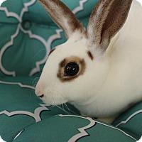 Adopt A Pet :: Bambi - Hillside, NJ