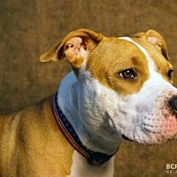 Adopt A Pet :: SASHA - Cliffside Park, NJ