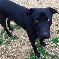 Adopt A Pet :: McGee - Clifton, TX