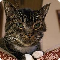 Adopt A Pet :: Sarah - Austintown, OH