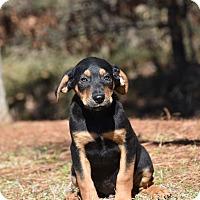 Adopt A Pet :: Beener - Groton, MA