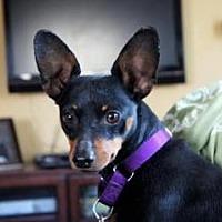 Adopt A Pet :: BAXTER - Jackson, NJ