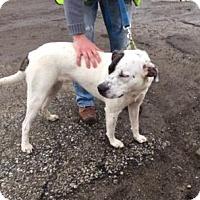 Adopt A Pet :: Taylor - Berea, OH