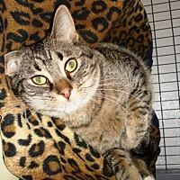 Adopt A Pet :: Beast - Kalamazoo, MI