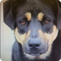 Adopt A Pet :: timber - Mission Viejo, CA