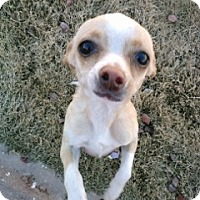 Adopt A Pet :: Princess - Only $75 adoption! - Litchfield Park, AZ