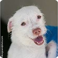 Adopt A Pet :: Bert - Mission Viejo, CA