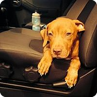 Adopt A Pet :: Baby Otis - Marlton, NJ