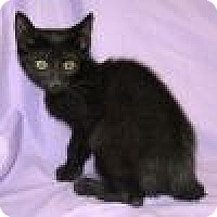 Adopt A Pet :: Dundee - Powell, OH