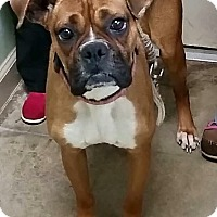Adopt A Pet :: Zoey - Garwood, NJ