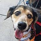 Adopt A Pet :: Holly