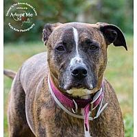 Adopt A Pet :: Twix - Batavia, OH