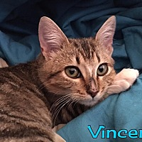 Adopt A Pet :: Vincent - Rosamond, CA