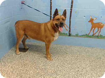 German Shepherd Dog Mix Dog for adoption in San Bernardino, California - URGENT on 1/17 SAN BERNARDINO