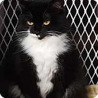 Domestic Longhair Cat for adoption in Monrovia, California - A Young Female: TEDDIE