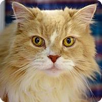 Adopt A Pet :: Ollie - Denver, CO