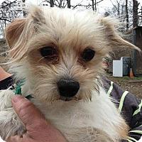 Adopt A Pet :: Buddy 1 - Trenton, NJ