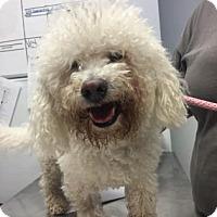 Adopt A Pet :: JJ French - New Castle, DE