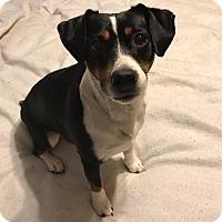 Adopt A Pet :: Fern - Chewelah, WA