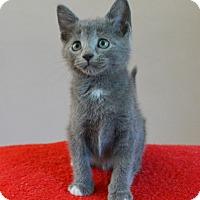 Adopt A Pet :: Avalon - Springfield, IL