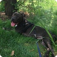 Adopt A Pet :: Charlie - Courtesy Post - Cincinnati, OH