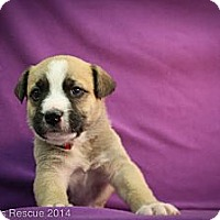 Adopt A Pet :: SWAK - Broomfield, CO