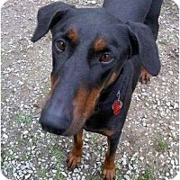 Adopt A Pet :: Benny--adopted!! - New Richmond, OH