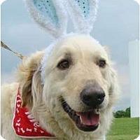 Adopt A Pet :: Curly - Oklahoma City, OK