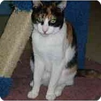 Adopt A Pet :: Sprinkles - Hamburg, NY