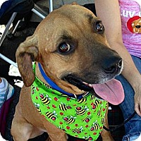 Adopt A Pet :: Trevor - Scottsdale, AZ