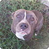 Adopt A Pet :: Gardy Lou - New Smyrna Beach, FL