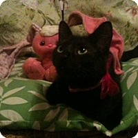 Adopt A Pet :: Camber - Akron, OH