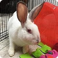 Adopt A Pet :: Chelsea - Woburn, MA