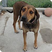 Adopt A Pet :: Sasha - Seguin, TX