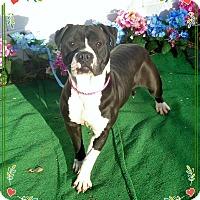 Adopt A Pet :: NIKI - Marietta, GA