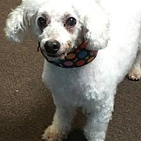 Adopt A Pet :: Billy - Valparaiso, IN