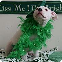 Adopt A Pet :: Julia - bloomfield, NJ