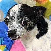 Adopt A Pet :: Bandit - Tavares, FL