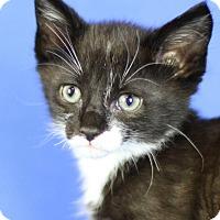 Adopt A Pet :: Buttercup - Winston-Salem, NC