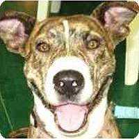 Adopt A Pet :: Mama Roxy - Dayton, OH